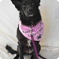 Adopt A Pet :: Tessa - Aurora, CO