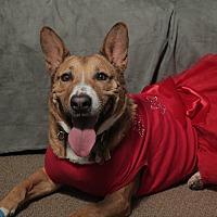 Adopt A Pet :: Dinah - Smithtown, NY