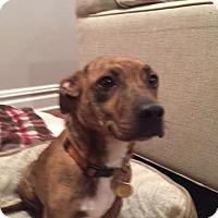 Adopt A Pet :: Madison - North Brunswick, NJ
