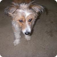 Adopt A Pet :: Bridgette - Buchanan Dam, TX