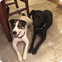 Adopt A Pet :: Eli - Youngstown, OH