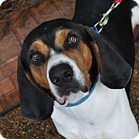 Adopt A Pet :: Levi - Atlanta, GA