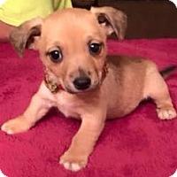 Adopt A Pet :: Drew - Boston, MA