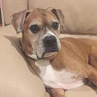 Adopt A Pet :: Mugsy - Spring Lake, NJ