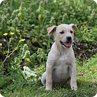 Adopt A Pet :: Hester - Groton, MA