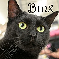 Adopt A Pet :: Binx - Wichita Falls, TX
