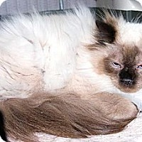 Adopt A Pet :: Teddy - Pittstown, NJ