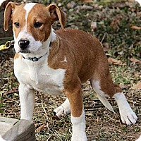 Adopt A Pet :: Fiona - Brattleboro, VT
