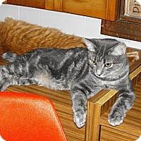Adopt A Pet :: Silverstreak - Grand Rapids, MI