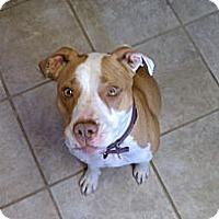Adopt A Pet :: Lea - las cruces, NM
