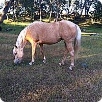 Adopt A Pet :: Hope - Elverta, CA