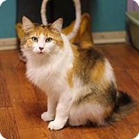 Adopt A Pet :: Skittles - Dover, OH