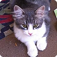 Adopt A Pet :: Pepe - Laguna Woods, CA