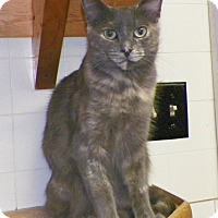 Adopt A Pet :: Ann - Dover, OH