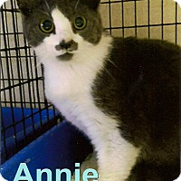 Adopt A Pet :: Annie - Medway, MA