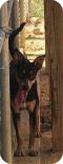 Hound (Unknown Type) Mix Dog for adoption in Columbus, Georgia - Tashi 8051