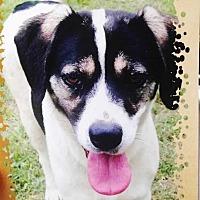 Adopt A Pet :: Sister (one) - E. Greenwhich, RI