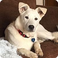 Adopt A Pet :: Kuma - Mission Viejo, CA
