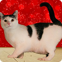 Adopt A Pet :: Faith - McDonough, GA