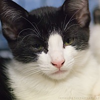 Adopt A Pet :: ROOK - Houston, TX