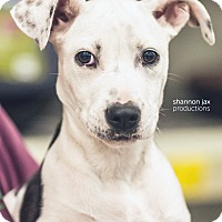 Adopt A Pet :: Persistence - Gainesville, FL