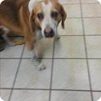 Adopt A Pet :: Blaze - Chippewa Falls, WI
