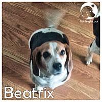 Adopt A Pet :: Beatrix - Pittsburgh, PA