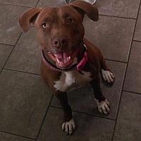 Adopt A Pet :: Annie - Tucson, AZ