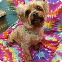 Adopt A Pet :: Simon - Crump, TN