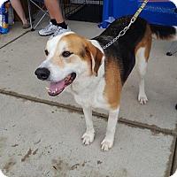Adopt A Pet :: Nathan - Columbus, IN