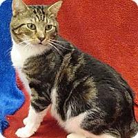 Adopt A Pet :: Fava - Hallandale, FL
