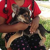 Adopt A Pet :: JJ - Inglewood, CA