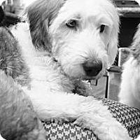 Adopt A Pet :: Novo - Temple City, CA
