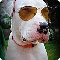 Adopt A Pet :: Holiday - Orlando, FL