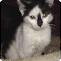 Adopt A Pet :: Smudge - Chesapeake, VA