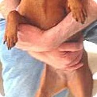 Adopt A Pet :: Abby - McDonough, GA