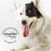 Adopt A Pet :: Lucky - Denver, CO