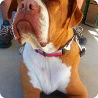 Adopt A Pet :: Maxine - Alamogordo, NM