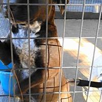 Adopt A Pet :: A-Samson - Tyler, TX