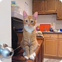 Adopt A Pet :: George - Trevose, PA