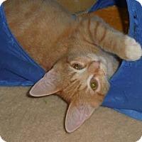 Adopt A Pet :: Tyler - Merrifield, VA