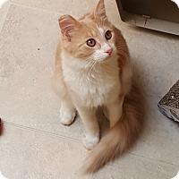 Adopt A Pet :: Fancy-Francie - Pasadena, CA