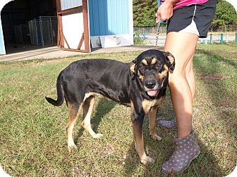 Rottweiler Mix Dog for adoption in Oakdale, Louisiana - Molly