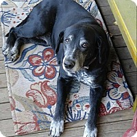 Labrador Retriever Mix Dog for adoption in Austin, Texas - Natasha