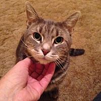 Adopt A Pet :: Chipper - Brainardsville, NY
