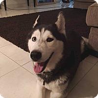 Adopt A Pet :: Juliet - Clearwater, FL