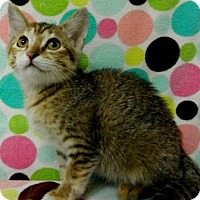 Adopt A Pet :: Indie - Tyler, TX