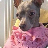 Adopt A Pet :: Pink - Newport, KY