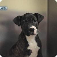 Hound (Unknown Type) Mix Dog for adoption in New York, New York - Melrose