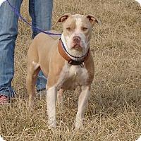 Adopt A Pet :: Tessa - Cameron, MO